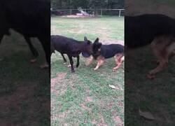 Enlace a ¿Quién dijo que un perro y una vaca no pueden ser amigos?