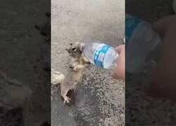 Enlace a El vídeo viral de una ardilla rogando que le den agua de una botella