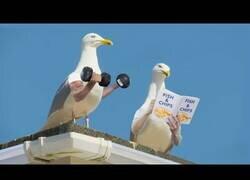 Enlace a ¿Cómo serían los pájaros si tuvieran brazos?