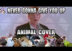 Enlace a 'Never Gonna Give You Up' de Rick Astley interpretada por animales