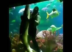 Enlace a Un buzo baila con un tiburón