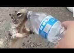 Enlace a Una ardilla sedienta pide beber agua a unos humanos