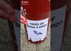 Enlace a Método científico descubre que los pájaros están cansados de ser pájaros