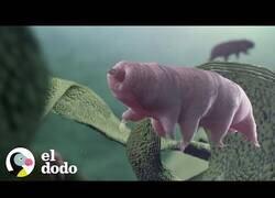 Enlace a El animal más fuerte y pequeño del mundo
