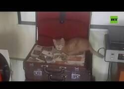 Enlace a Una gatita roba dinero de un bar en Rusia