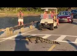 Enlace a El tráfico se detiene para que dos caimanes crucen un paso de cebra