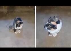 Enlace a Adoptan a un gato para atrapar a un ratón, pero estos se hacen amigos