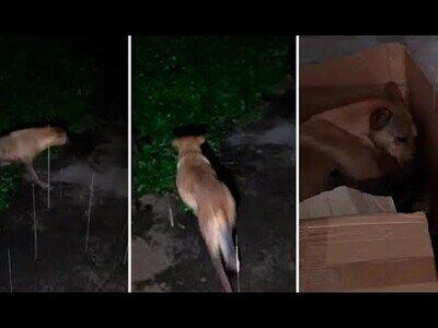 Perra salva a sus cachorros de morir ahogados en un hoyo