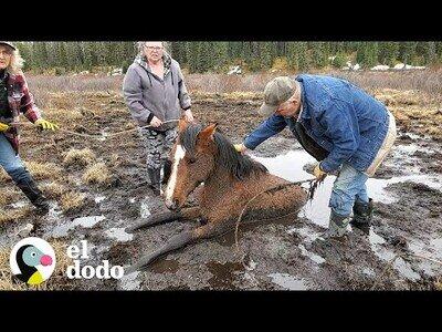 Unos extraños ayudan a una yegua atrapada en el lodo