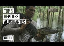 Enlace a Los reptiles más alucinantes que se ha encontrado Wild Frank