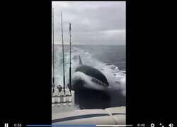 Enlace a Orcas persiguen y aterrorizan a un grupo de pescadores