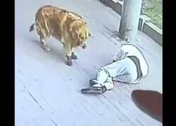 Enlace a Un hombre queda inconsciente al caerle un gato encima
