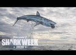 Enlace a El salto de un tiburón más alto jamás filmado
