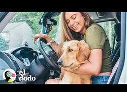 Enlace a Así es vivir en una camioneta con tus perros