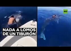 Enlace a Un saudí salta al Mar Rojo para montar a lomos de un tiburón