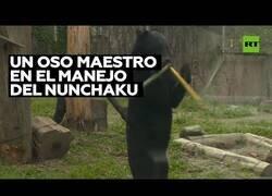 Enlace a Un oso experto en el uso del nunchaku sorprende en un zoo de Japón