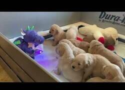 Enlace a Un muñeco interactivo cuida de 10 cachorros