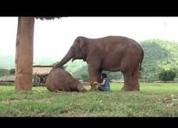 Enlace a Elefante se lleva a esta cuidadora lejos de los visitantes para que le cante una nana a su bebé elefante