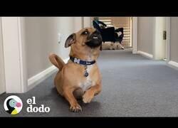 Enlace a Este perro se arrastra para rascarse la barriga todas las mañanas