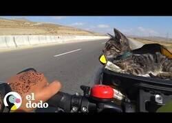 Enlace a Mujeres en viaje en bici rescatan una gatita callejera