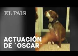 Enlace a Un perro simula un desmayo para evitar que le corten las uñas