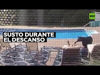 Un oso despierta a un hombre dormido en la piscina de su casa