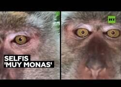 Enlace a Encuentran un móvil con vídeo-selfies hechos por un mono