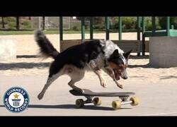 Enlace a El perro 'skater' con un record Guiness
