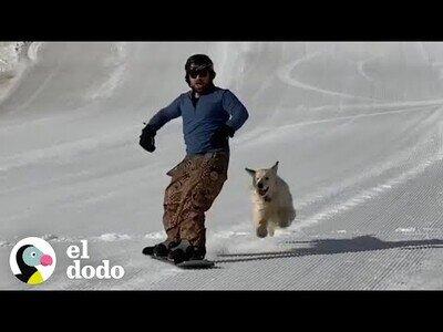 La perrita que adora hacer snowboard