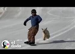 Enlace a La perrita que adora hacer snowboard