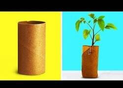 Enlace a Increíbles usos que puedes darle a los rollos de papel higiénico
