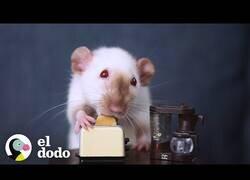 Enlace a Mujer cocina platos en miniatura para sus ratitas