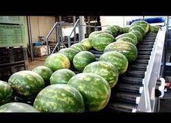 Enlace a Máquinas de alimentos y sistemas de procesamiento