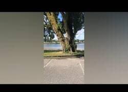 Enlace a Grabando el momento justo en el que un árbol se desquebraja