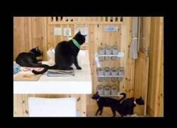 Enlace a La cafetería de la mala suerte: así es el único local dedicado a los gatos negros del mundo