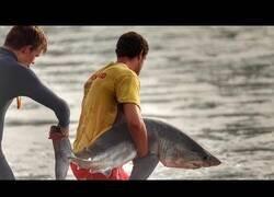 Enlace a Rescatando a un tiburón que se había quedado encallado en una zona rocosa de la costa