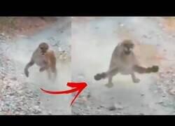 Enlace a Un puma acosa y persigue a un corredor durante seis minutos agónicos