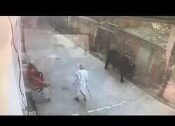 Enlace a Y por eso no se aconseja molestar a un toro
