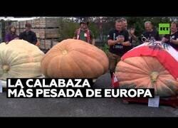 Enlace a Una calabaza de casi 800 kg es proclamada como la más pesada de Europa