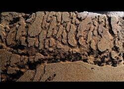 Enlace a El 'time-lapse' de la creación de un hormiguero