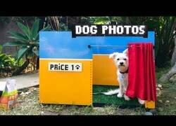 Enlace a Creando un 'set de sefies' para perros con fichas de Lego