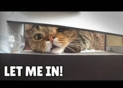 Enlace a Gatos VS Máquina expendedora