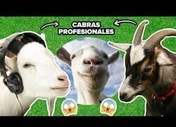 Enlace a Ponen a cabras a jugar al simulador virtual de cabras