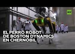 Enlace a Un perro robot llega a Chernóbil para detectar radiación