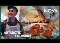 Enlace a ¿Qué comen en la Antártida?