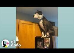 Enlace a El perro con complejo de gato