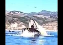 Enlace a Dos kayakistas, a punto de ser engullidos por una ballena