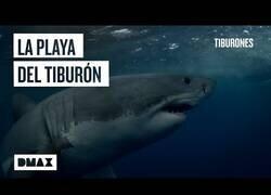 Enlace a La playa en la que un tiburón ataca cada dos años
