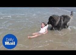 Enlace a Un perro intenta rescatar a una niña que jugaba en la playa pensando que estaba en peligro