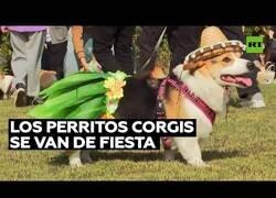 Enlace a Cientos de perros corgis se congregan en una reunión en Shangai